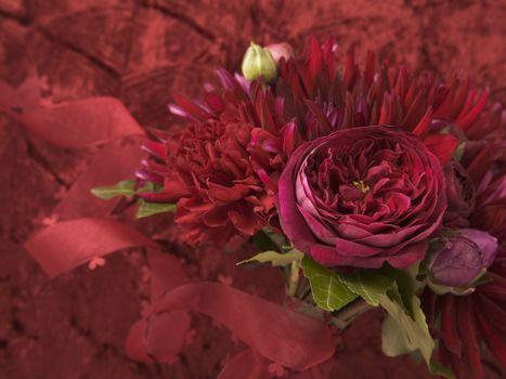 Фото бесплатно цветок, роза, лепестки