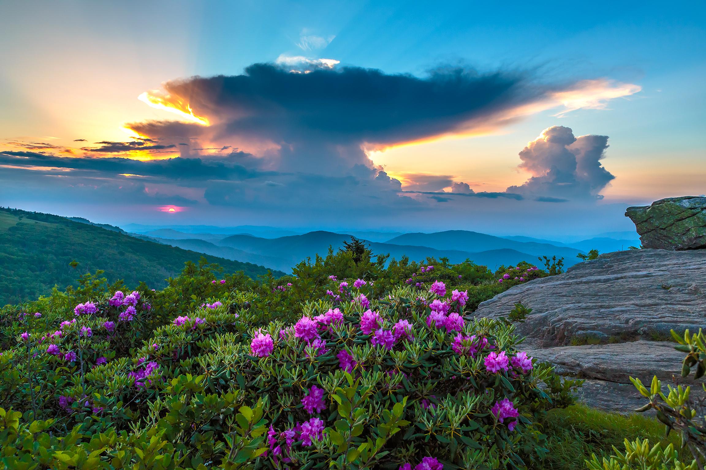 цветы, горы, скалы