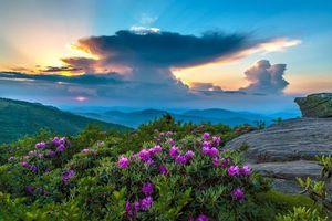 Бесплатные фото цветы, горы, скалы, природа