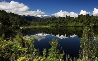 Фото бесплатно берег, деревья, лес