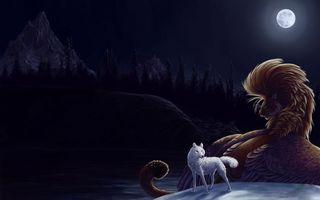 Заставки волк,зверь,шерсть,взгляд,лапы,хвост,луна