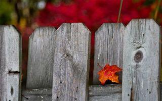 Обои забор, листок, осень, клен, желтый, оранжевый, красный, фон, фото, дерево, гвозди, природа