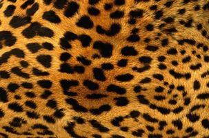 Заставки мех леопард, пятна, черные