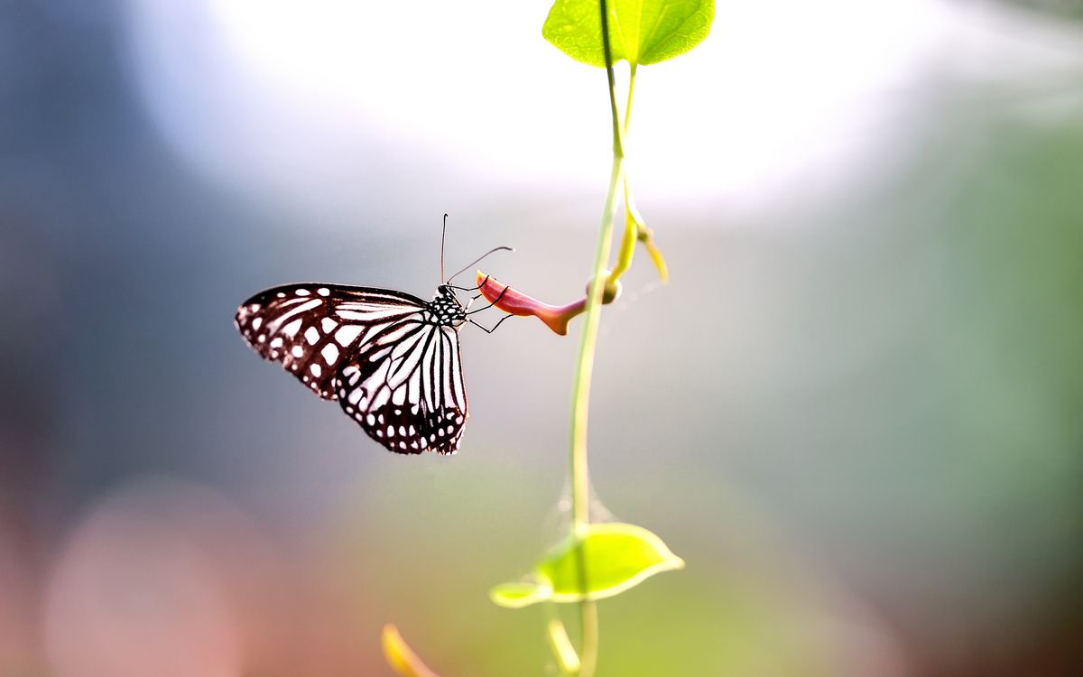 Photos for free butterfly, grass, background - to the desktop