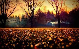 Фото бесплатно деревья, ветки, лучи