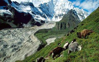 Заставки горы, трава, высота