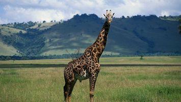 Заставки жираф, уши, глаза