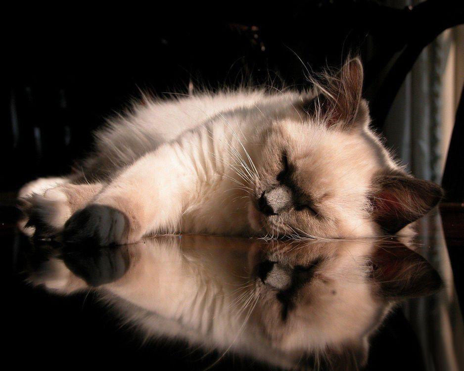 Фото бесплатно кот, котенок, спит - на рабочий стол