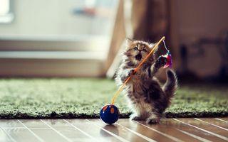 Бесплатные фото котенок,пушистый,игрушка,играет,палас,окно,кошки