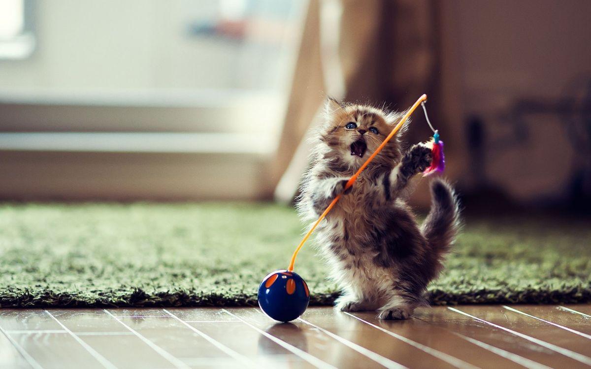 Фото бесплатно котенок, пушистый, игрушка - на рабочий стол