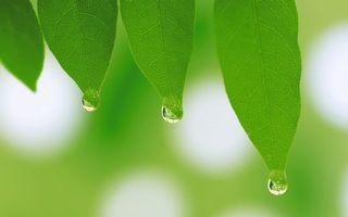 Заставки листья,зеленые,прожилки,капли,вода,макро