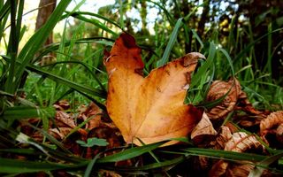 Photo free leaves, grass, autumn
