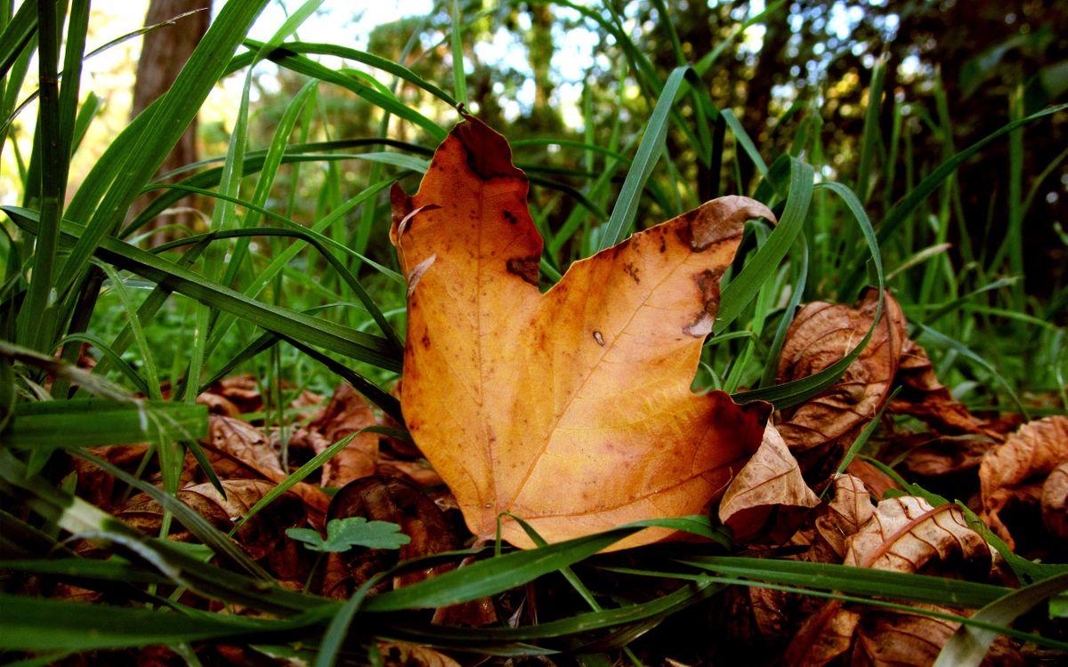 Фото бесплатно листья, трава, осень - на рабочий стол