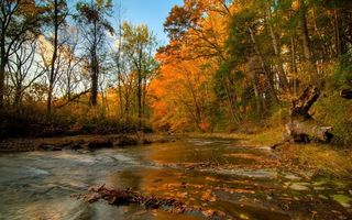 Photo free leaves, water, rapids