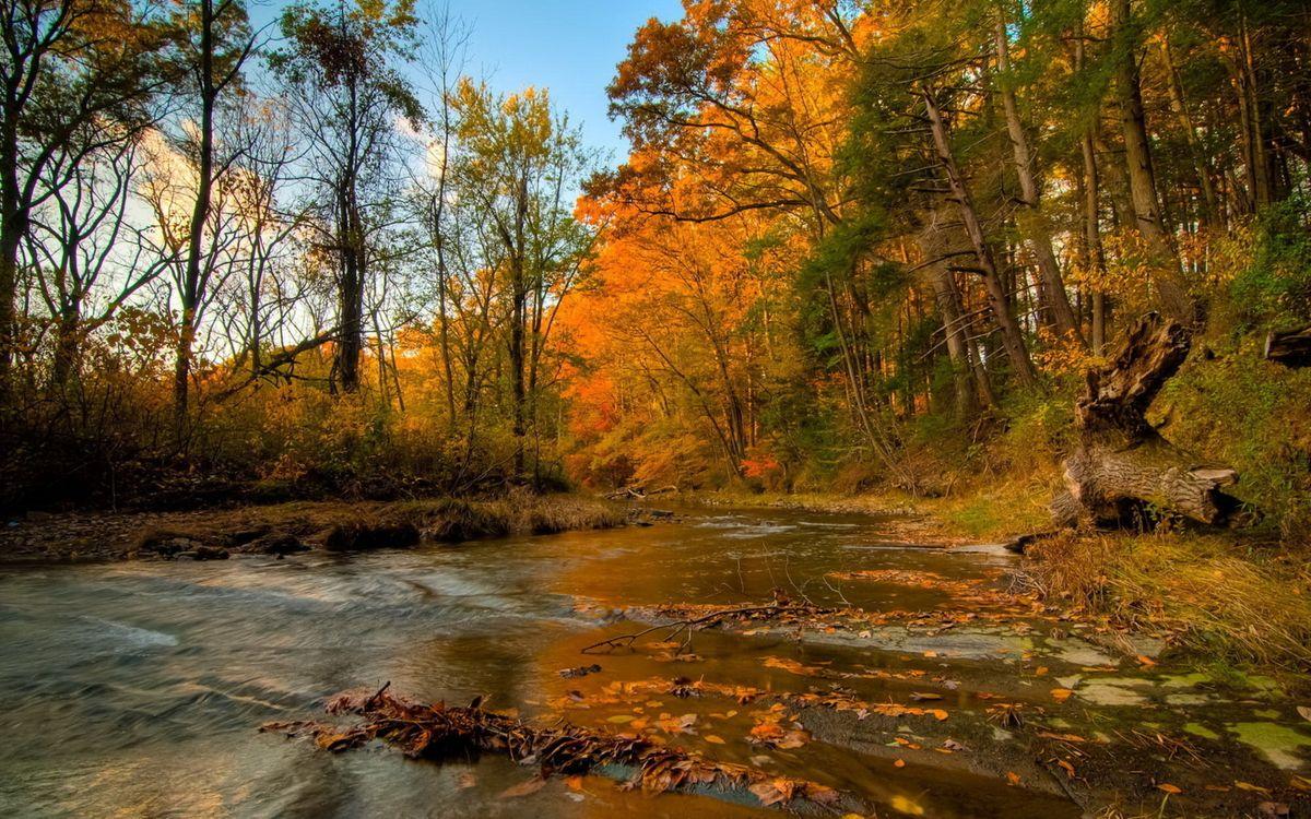 Фото бесплатно листья, вода, пороги, деревья, лес, пень, пейзажи, природа, природа