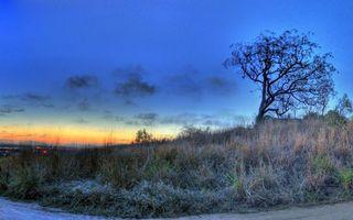 Фото бесплатно осень, дерево, трава, дорога, закат, небо, облака, природа