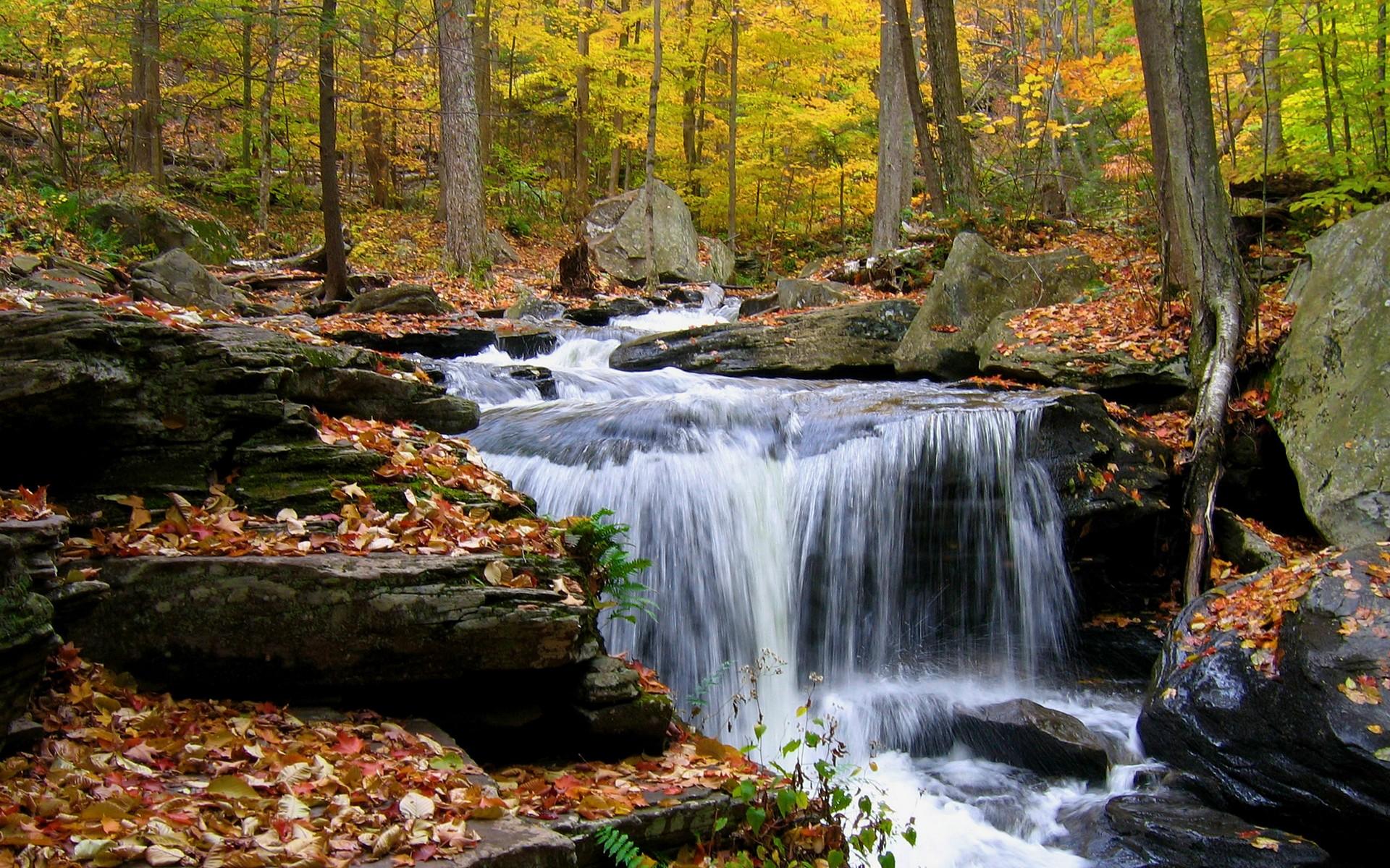 осень, лес, ручей