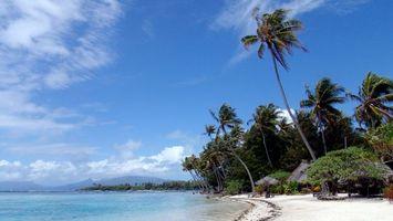 Бесплатные фото пальмы,небо,облака,вода,песок,берег,красиво