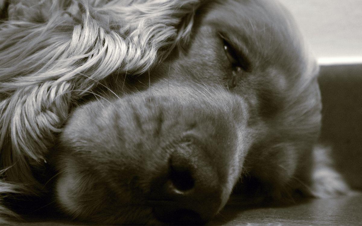 Фото бесплатно пес, щенок, нос - на рабочий стол