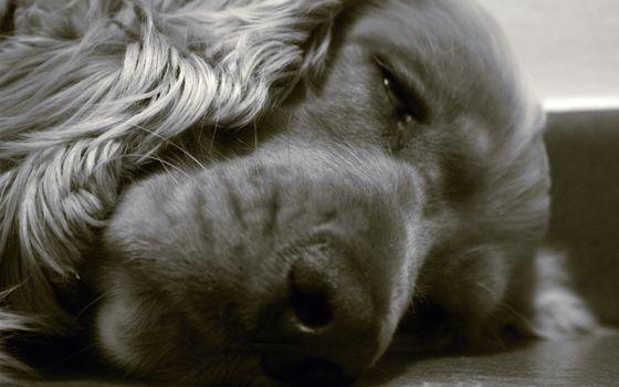 Photo free sleep, ears, eyes