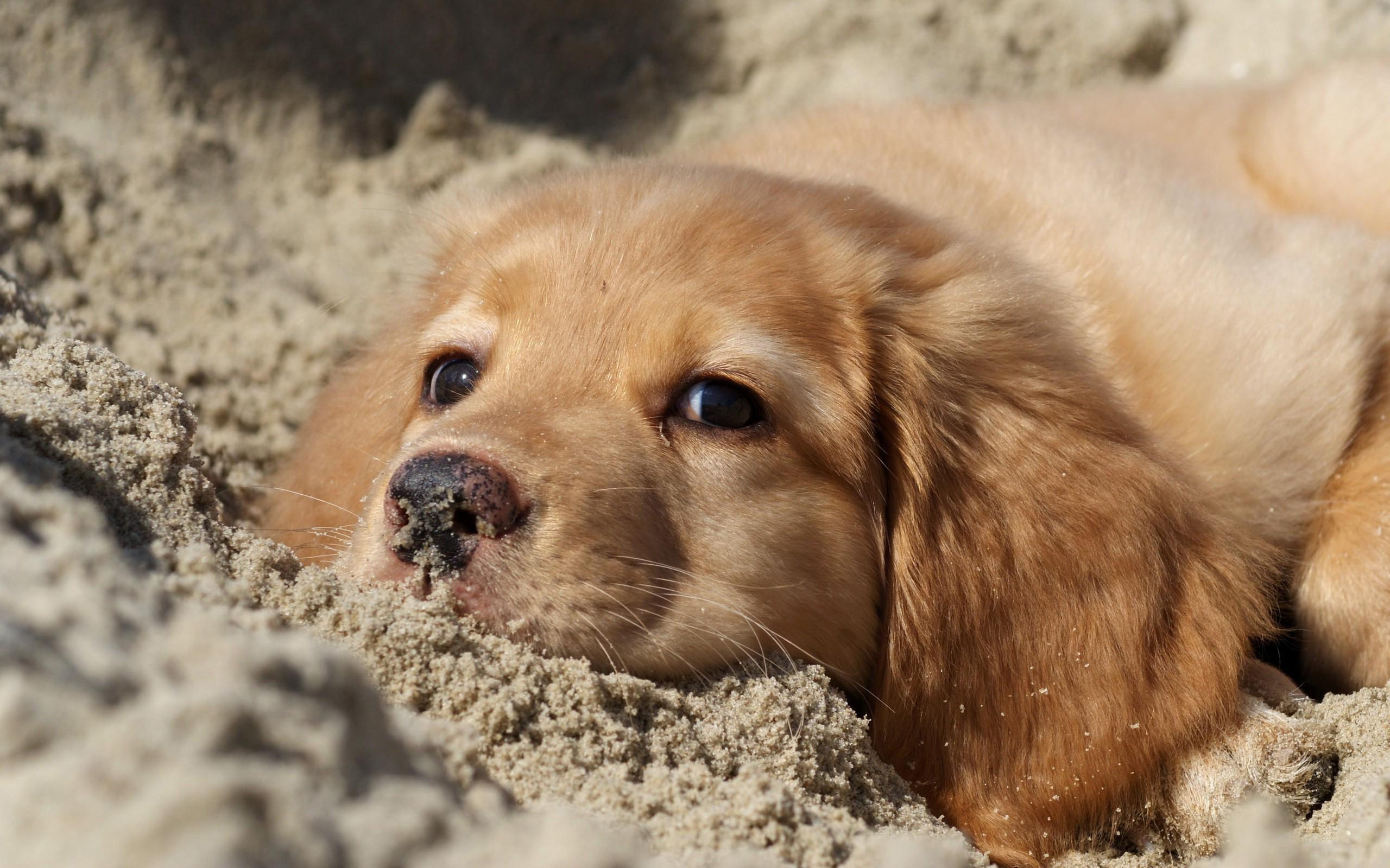 милый щенок без смс