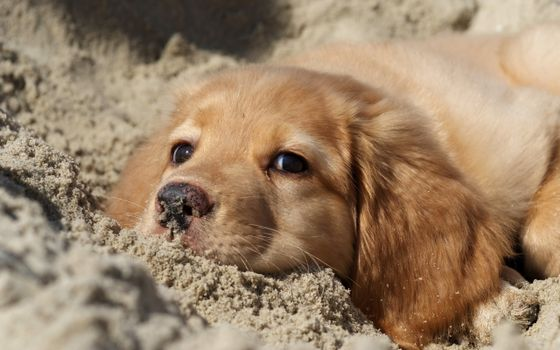 Photo free sand, dog, cable