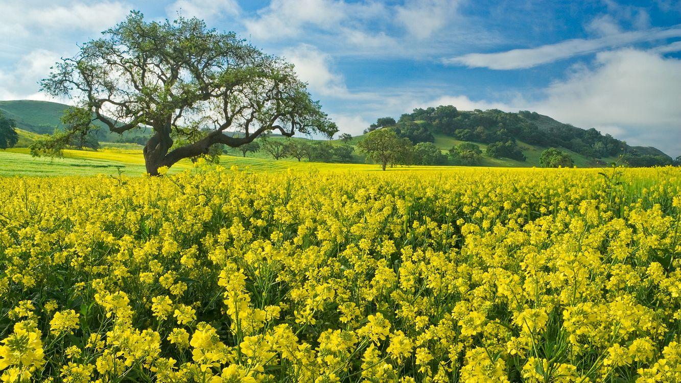 Заставка поле, трава, цветы на рабочий стол бесплатно