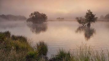 Бесплатные фото река,деревья,берег,трава,отражение,туман,природа