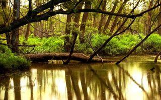Бесплатные фото река, пруд, лес, деревья, ветки, трава, отражение