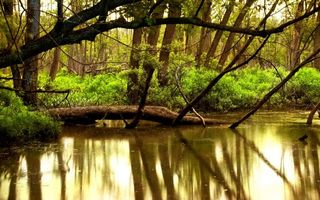 Фото бесплатно река, пруд, лес