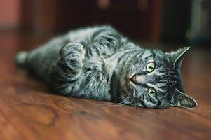 Заставки кот, раскраска, полосатый, пепельный, шерсть, глаза, мордашка, кошки, животные