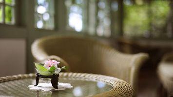 Заставки стол, кресло, цветок