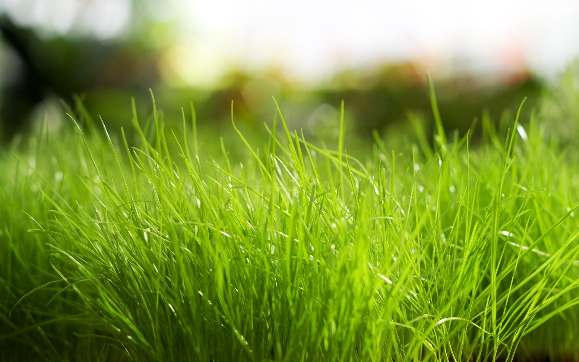 трава, поле, газон