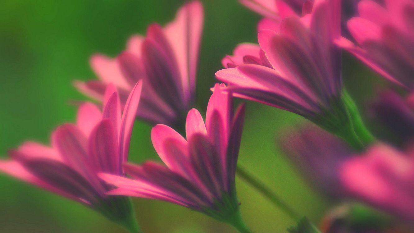 Фото бесплатно цветки, лепестки, лето, поле, луг, розовые, трава, листья, зелень, цветы, цветы
