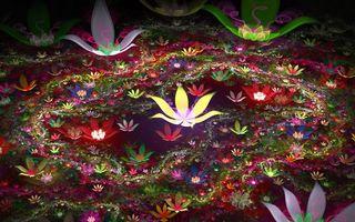 Фото бесплатно линии, узор, цветы