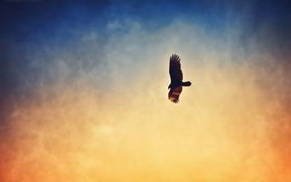Бесплатные фото ястреб,полет,крылья,небо,облака,закат,солнце