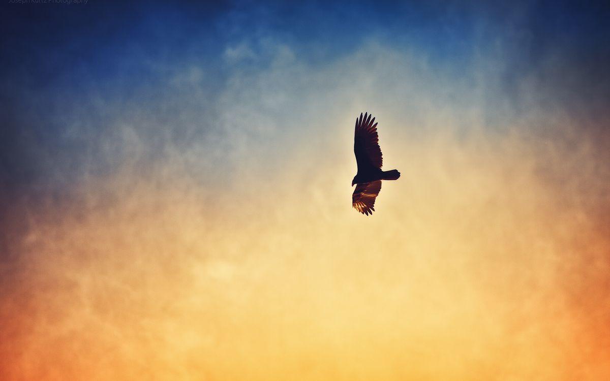 Фото бесплатно закат, ястреб, крылья - на рабочий стол