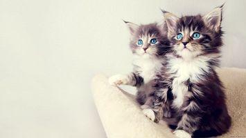 Заставки кошенята, очі, сині