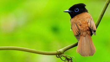 Заставки пташка, сидить, на гілці