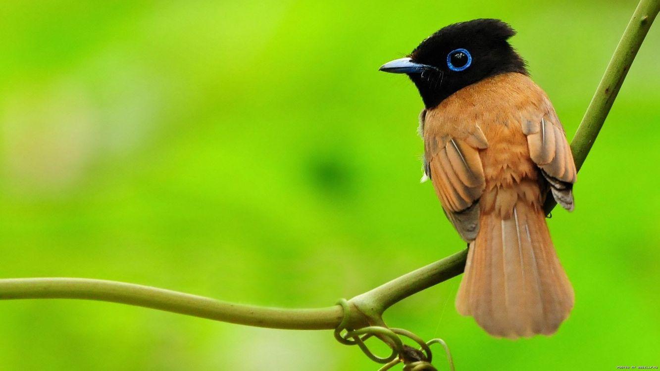 Фото бесплатно пташка, сидить, на гілці, гілка, зелений, ліс, животные, природа, птицы, птицы