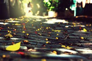 Бесплатные фото камни, город, листва, осень, брущатка