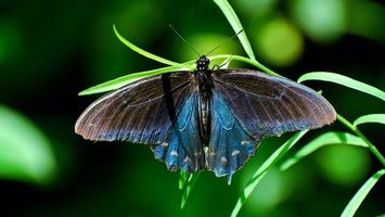 Photo free butterfly, wings, antennae