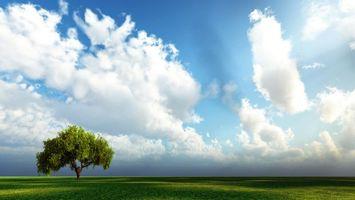 Бесплатные фото дерево,поле,трава,зеленая,красиво,небо,облака