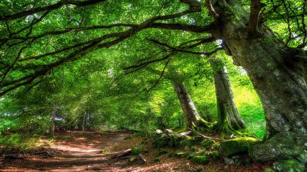 Бесплатные фото деревья,стволы,листва,тропа,камни,трава,корни,природа