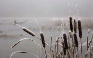 Бесплатные фото камыши,растения,иней,снег,зима,холод,мороз