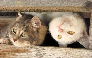 Фото бесплатно кошки, выглядывают, морды