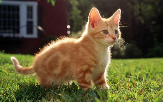 Бесплатные фото котенок,рыжик,лужайка,трава,газон,дом,кошки
