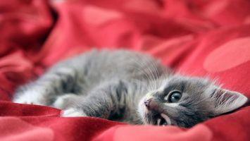 Фото бесплатно котенок, шерсть, лапы