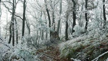 Бесплатные фото лес,деревья,снег,красиво,зима,холодно,трава