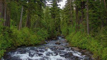 Фото бесплатно лес, тайга, деревья